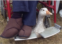 feet and goose