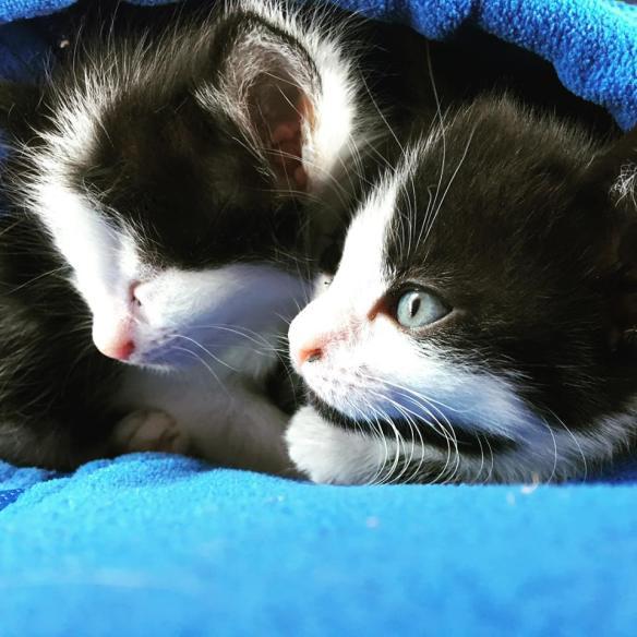 kittens aug 17_1