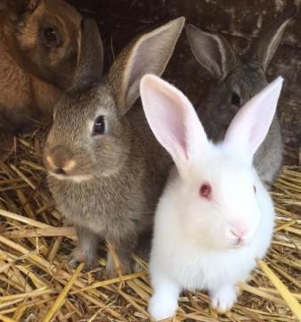 June 17 bunnies